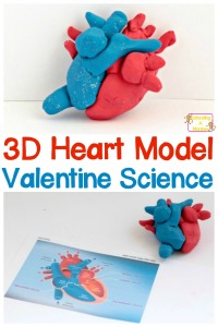 diy-heart-model-pin